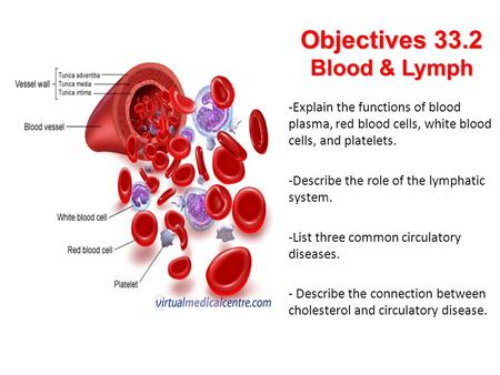 Objectives 33.2 Blood & Lymph