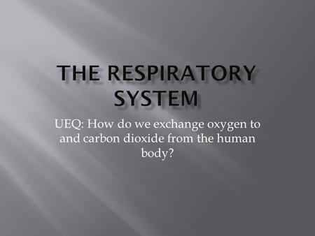 UEQ: How do we exchange oxygen to and carbon dioxide from the human body?