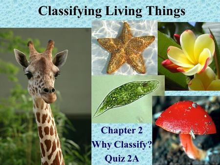 Classifying Living Things Chapter 2 Why Classify? Quiz 2A.
