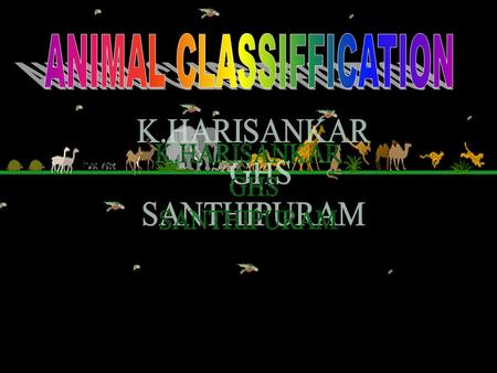 K.HARISANKAR GHS SANTHIPURAM IMPORTANCE OF ANIMAL CLASSIFICATION So far, over 10 lakhs of animal species have been identified and described. They show.