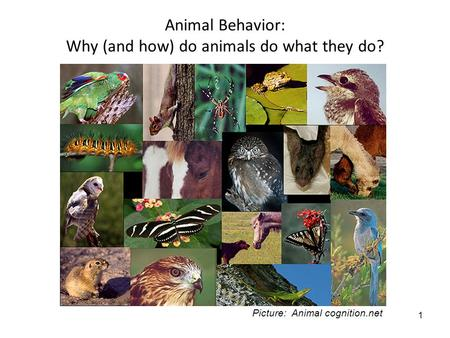 1 Animal Behavior: Why (and how) do animals do what they do? Picture: Animal cognition.net.