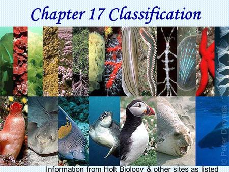 Chapter 17 <strong>Classification</strong> Information from Holt Biology & other sites as listed.