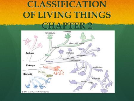 CLASSIFICATION OF LIVING THINGS CHAPTER 2