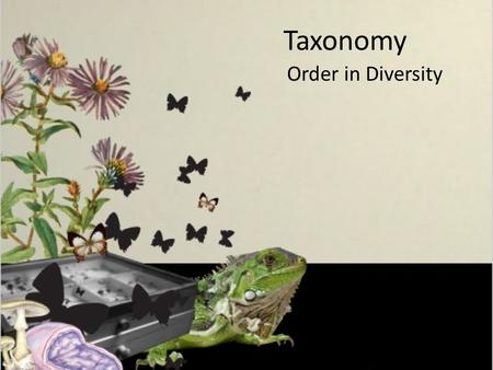 Taxonomy Order in Diversity. Taxonomy: the science of classifying organisms into similar groups based on their characteristics and evolutionary history.