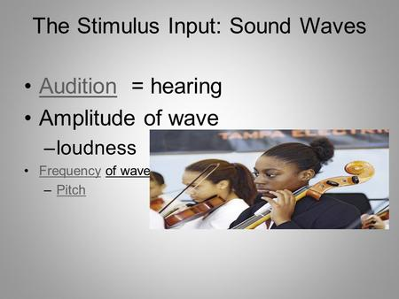 The Stimulus Input: Sound Waves Audition = hearingAudition Amplitude of wave –loudness Frequency of waveFrequency –PitchPitch.
