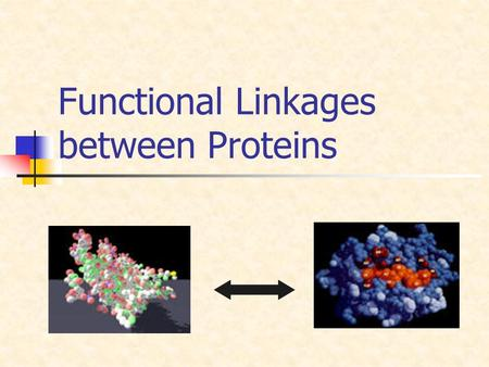 Functional Linkages between Proteins. Introduction Piles of Information Flakes of Knowledge AGCATCCGACTAGCATCAGCTAGCAGCAGA CTCACGATGTGACTGCATGCGTCATTATCTA.