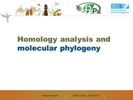 Alexis Dereeper Homology analysis and molecular phylogeny CIBA courses – Brasil 2011.
