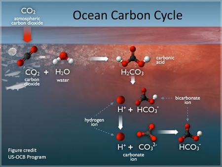 Ocean Carbon Cycle Figure credit US-OCB Program. Why study ocean carbon cycle? CO 2 is an important greenhouse gas Ocean is a major sink of fossil fuel.