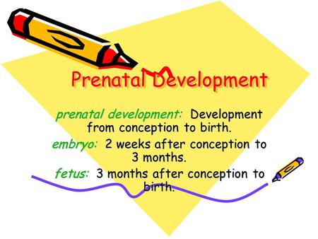 Prenatal Development prenatal development: Development from conception to birth. embryo: 2 weeks after conception to 3 months. fetus: 3 months after conception.