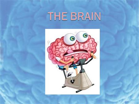 Today's Goal  You will be able to… Today's Goal  You will be able to…  Describe the functions of the brain structures.