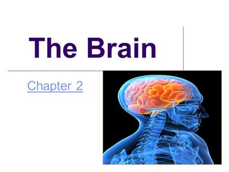 The Brain Chapter 2 The Brain Techniques for Studying the Brain.