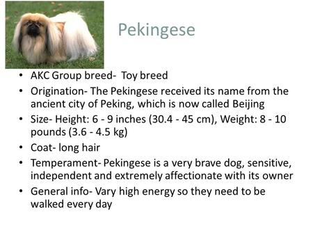 Pekingese AKC Group breed- Toy breed