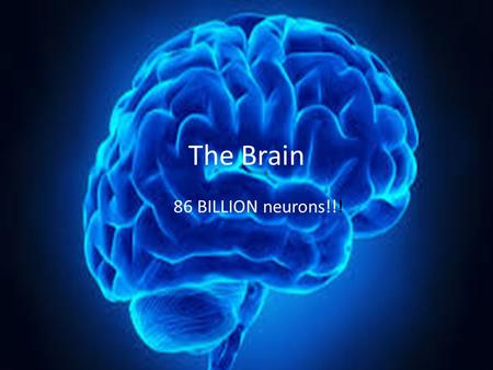 The Brain 86 BILLION neurons!!!. Particular regions have particular function.