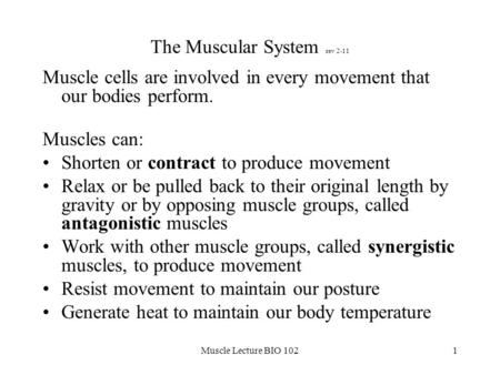 The Muscular System rev 2-11