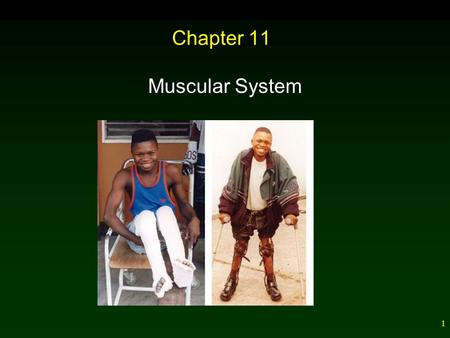 1 Chapter 11 Muscular System. 2 Outline Types and Functions of Muscles – Smooth – Cardiac – Skeletal Muscle Innervation Whole Muscle Contraction – Oxygen.