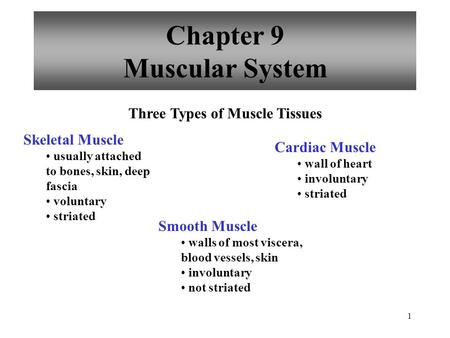1 Chapter 9 Muscular System Three Types of Muscle Tissues Skeletal Muscle usually attached to bones, skin, deep fascia voluntary striated Smooth Muscle.