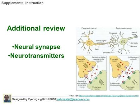 Additional review Neural synapse Neurotransmitters