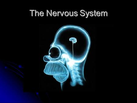 The Nervous System. Nervous system One of the two main communication systems in the body One of the two main communication systems in the body Coordinates.
