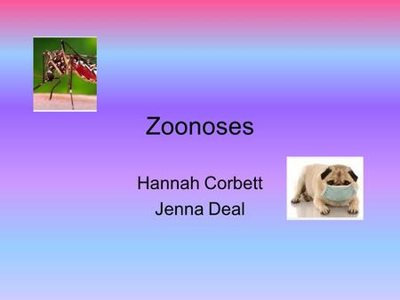 Zoonoses Hannah Corbett Jenna Deal. Essential Question How can you prevent zoonotic diseases?
