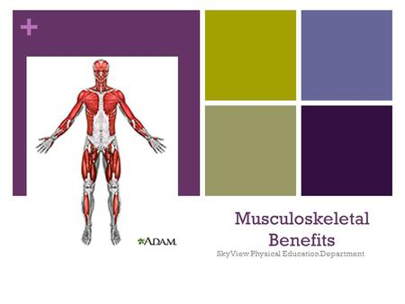 + Musculoskeletal Benefits SkyView Physical Education Department.