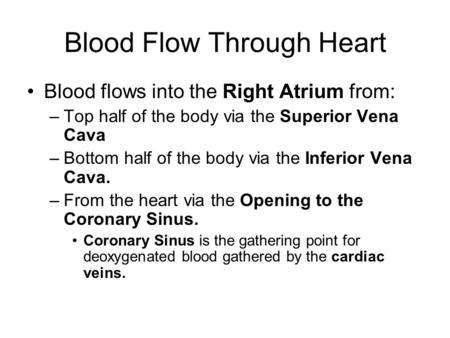 Blood Flow Through Heart Blood flows into the Right Atrium from: –Top half of the body via the Superior Vena Cava –Bottom half of the body via the Inferior.