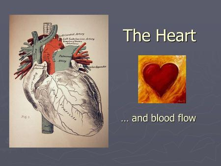The Heart … and blood flow.