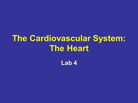The Cardiovascular System: The Heart Lab 4. Cardiac Muscle Contraction Heart muscle: –Is stimulated by nerves and is self-excitable (automaticity) –Contracts.