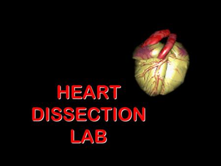 HEART DISSECTION LAB. Procedure 1.Obtain a dissection pan and dissecting kit.