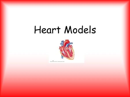 Heart Models. External Heart – Anterior HEART CHAMBERS Right Atrium Right Ventricle Apex Left Atrium Left Ventricle.