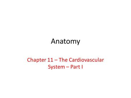 Chapter 11 – The Cardiovascular System – Part I