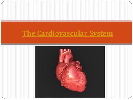The Cardiovascular System. Q - How many liters of blood does the adult human body contain? A. 5 liters B. 10 liters C. 15 liters.