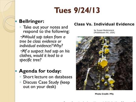 Tues 9/24/13 Bellringer: ◦ Take out your notes and respond to the following:  Would sap taken from a tree be class evidence or individual evidence? Why?