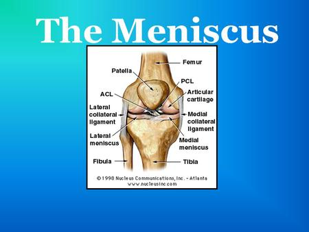 The Meniscus. Anatomy Lies between the femur and the tibia Two menisci: lateral and medial Avascular- doesn't have blood vessels inside (prevents it from.