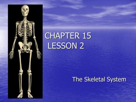 CHAPTER 15 LESSON 2 The Skeletal System.