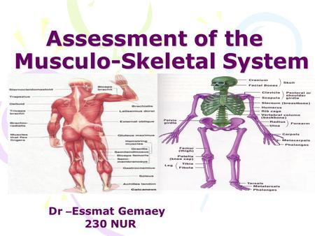 Assessment of the Musculo-Skeletal System Dr – Essmat Gemaey 230 NUR.