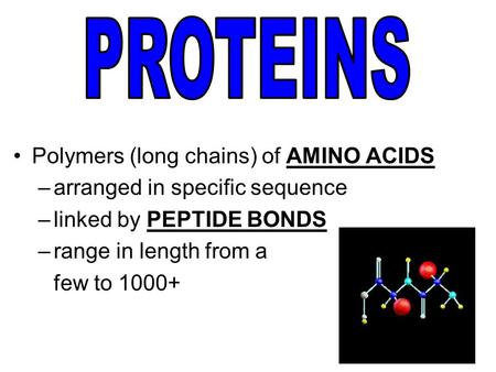 Polymers (long chains) of AMINO ACIDS –arranged in specific sequence –linked by PEPTIDE BONDS –range in length from a few to 1000+