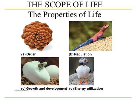  a  Order  b  Regulation  c  Growth and development  d  Energy utilization THE SCOPE OF LIFE The Properties of Life.