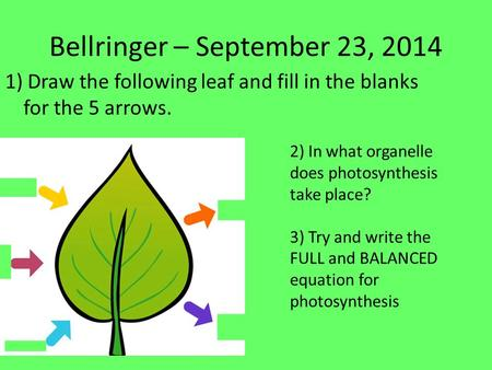 Bellringer – September 23, 2014 1) Draw the following leaf and fill in the blanks for the 5 arrows. 2) In what organelle does photosynthesis take place?