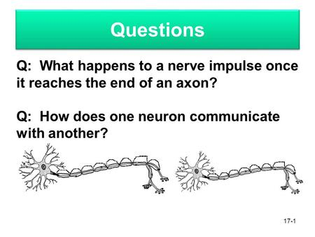 Questions 17-1 Q: What happens to a nerve impulse once it reaches the end of an axon? Q: How does one neuron communicate with another?