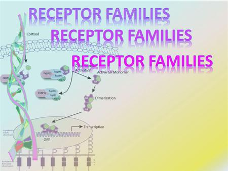 By the end of this lecture you will be able to :  Classify receptors into their main superfamilies  Identify the nature & time frame of their response.