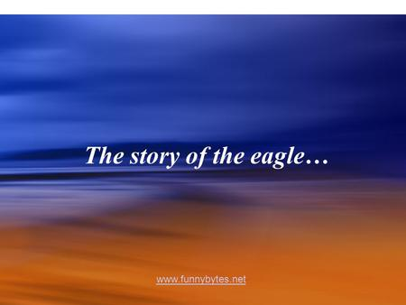 The story of the eagle… www.funnybytes.net. The eagle has the longest life-span of its' species.