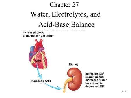 27-1 Chapter 27 Water, Electrolytes, and Acid-Base Balance.