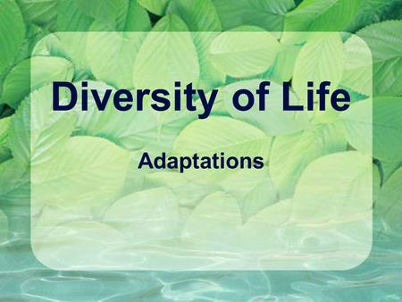 Diversity of Life Adaptations. Definitions Characteristics that give an organism a better chance of survival – a survival advantage Special traits that.