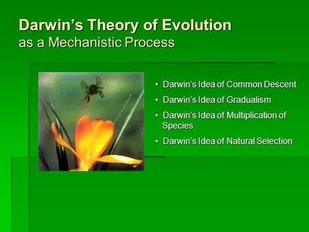 Darwin's Theory of Evolution as a Mechanistic Process Darwin's Idea of Common Descent Darwin's Idea of Common Descent Darwin's Idea of Gradualism Darwin's.