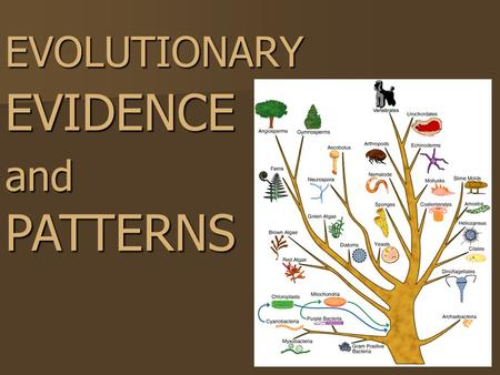 EVOLUTIONARY EVIDENCE and PATTERNS. ARTIFICIAL SELECTION.