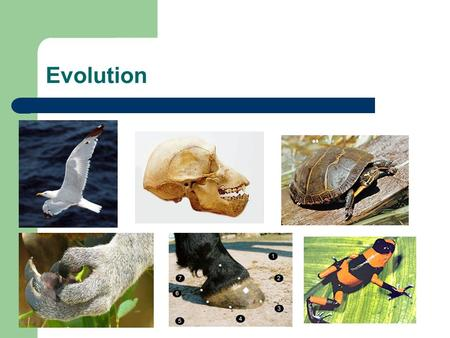 Explain Evolution By Natural Selection Aristotle