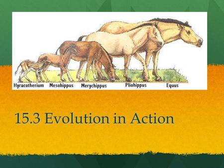 15.3 Evolution in Action. Standards CLE 3210.5.5 Explain how evolution contributes to the amount of biodiversity CLE 3210.5.3 Explain how genetic variation.