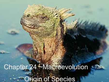Chapter 24 ~Macroevolution Origin of Species. What is a species? A population whose members have the potential to interbreed and produce viable, fertile.