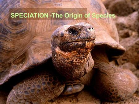 SPECIATION -The Origin of Species. What is speciation?  Recap:  Species = a population or group of populations whose individual members can interbreed.