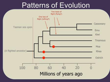 Patterns of Evolution. Sequential Evolution Changes in the gene pool from one generation to the next. Populations evolve gradually as they become adapted.